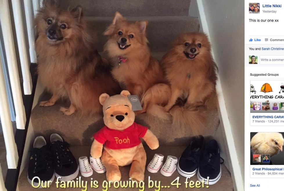 twin PREGNANCY announcement with pets